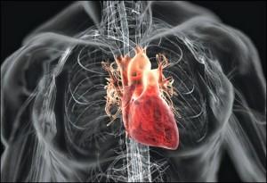 препарат на основі донорських стовбурових клітин серця для лікування серцевої недостатності у хворих
