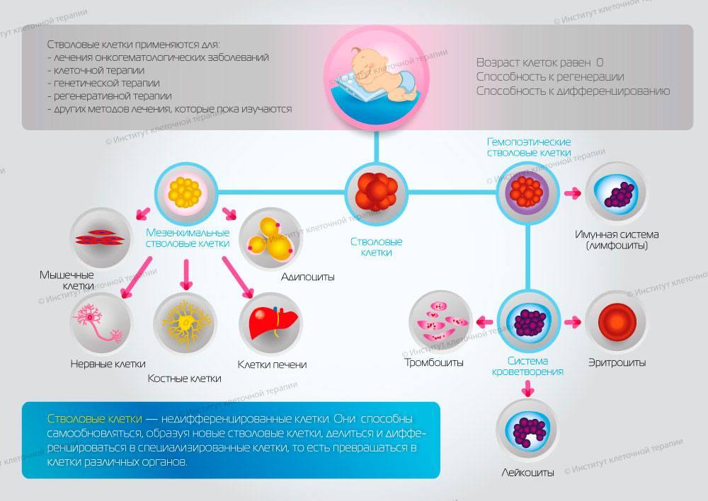 infografika4_small