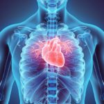 Progress of Ukrainian scientists: heart valves are being created from the  stem cells